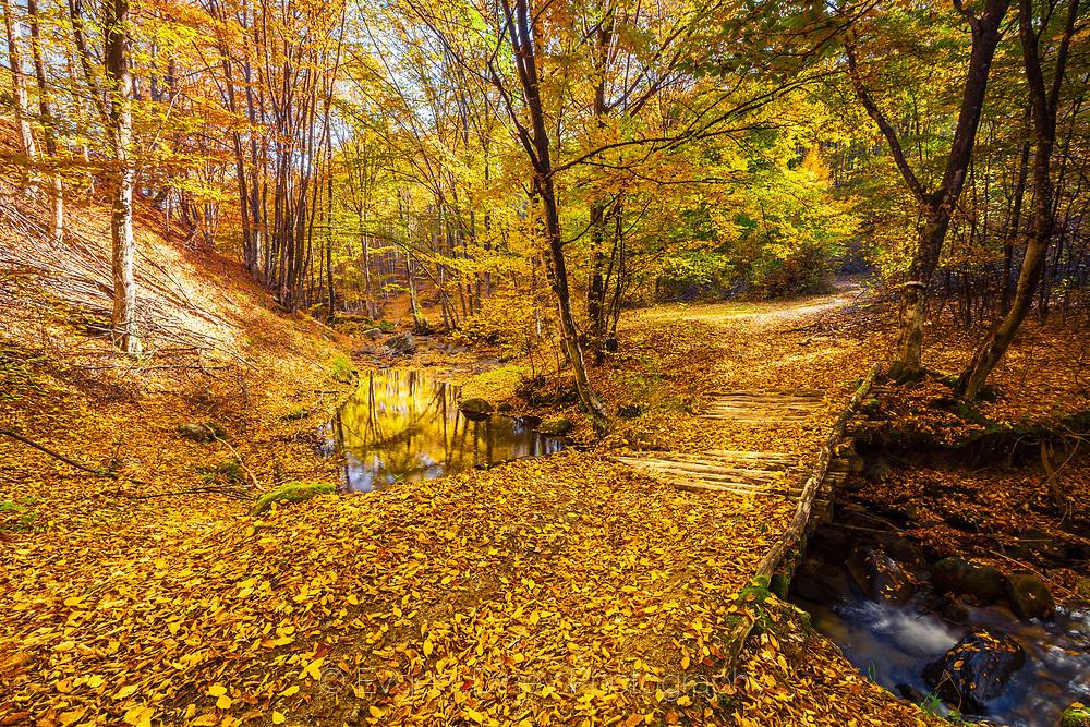 Есен в Средна гора