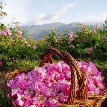 В долината на розите и тракийските царе
